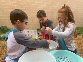 Alba-Golden kindergartners learning through gardening